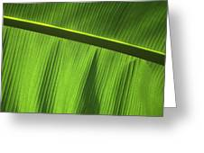 Green Leaf, Close-up Greeting Card