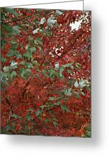 Green Leaves Against Red Leaves Greeting Card