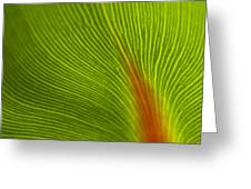 Green Leaves Series 10 Greeting Card