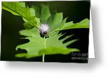 Green Oak Leaf And Flower Greeting Card