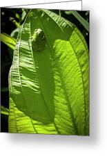 Green On Green Greeting Card by Albert Seger