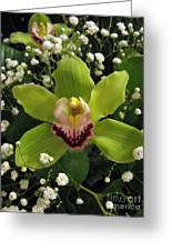 Green Orchid In Baby's Breath Greeting Card