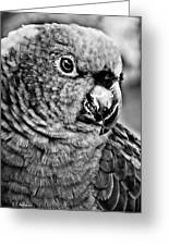 Green Parrot - Bw Greeting Card