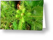 Green Pine Needles 2 Greeting Card