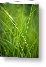 Green Prairie Grass Greeting Card