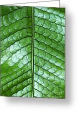 Green Scaly Leaf Pattern Greeting Card