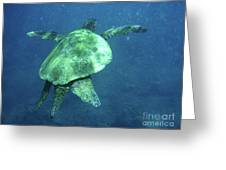 Green Sea Turtle 1 Greeting Card