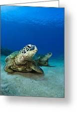 Green Sea Turtle Couple Greeting Card