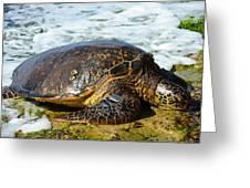 Green Sea Turtle Of Hawaii Greeting Card