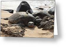 Green Sea Turtle With Gps Greeting Card
