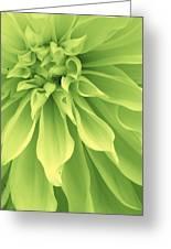 Green Sherbet Greeting Card