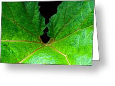 Green Spider Leaf Greeting Card