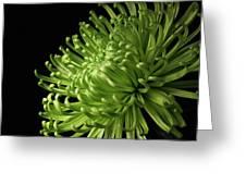 Green Spider Mum Greeting Card