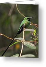 Green Tailed Trainbearer Greeting Card