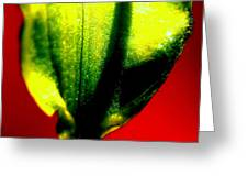 Green Tear Greeting Card