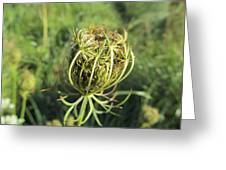 Green Thistle Greeting Card