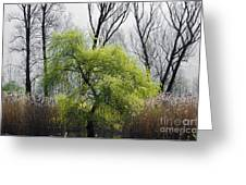 Green Tree And Pampas Grass Greeting Card