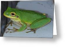 Green Tree Toad Greeting Card