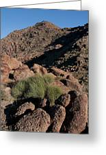 Green Tuft In Sandstone Greeting Card