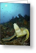 Green Turtle On Reef, Manado, North Greeting Card