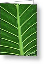 Green Veiny Leaf 1 Greeting Card