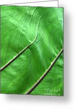 Green Veiny Leaf 2 Greeting Card