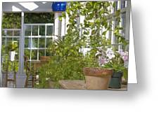 Greenery In A Garden Store Greeting Card by Andersen Ross