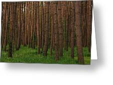Greening In The Woods Greeting Card