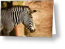 Grevys Zebra Greeting Card