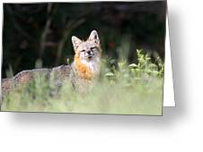 Grey Fox - The Man Greeting Card