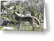 grey Fox 2 Greeting Card