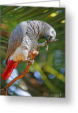 Grey Parrot Greeting Card