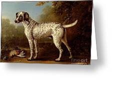 Grey Spotted Hound Greeting Card