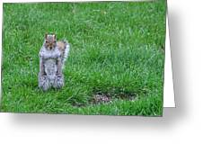 Grey Squirrel In The Rain II Greeting Card