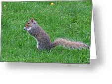 Grey Squirrel In The Rain Greeting Card