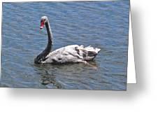 Grey Swan Greeting Card