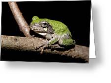 Grey Tree Frog Greeting Card