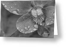 Grey Violet Greeting Card