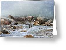 Grey Wolf Jumping Over A Mountain Stream Greeting Card