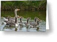 Greylag Goose Anser Anser Couple Greeting Card