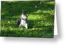 Greynolds Park Squirrel Greeting Card