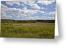 Griggstown Native Grassland Preserve Greeting Card by David Letts