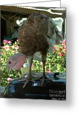 Grill Turkey Anyone Redneck Style Greeting Card
