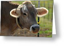 Grinning Cow Greeting Card