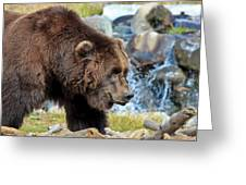 Griz Greeting Card