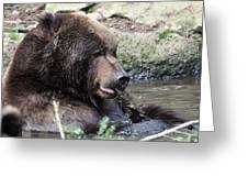 Grizzley - 0008 Greeting Card