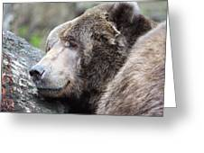 Grizzley - 0014 Greeting Card