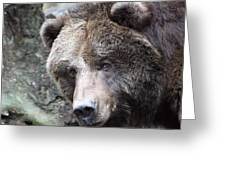 Grizzley - 0015 Greeting Card