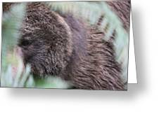 Grizzley - 0016 Greeting Card