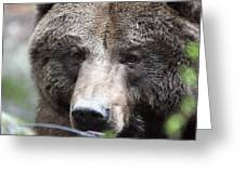 Grizzley - 0018 Greeting Card